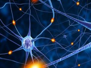 Las neuronas derivadas de células madre detienen las convulsiones y mejoran la función cognitiva