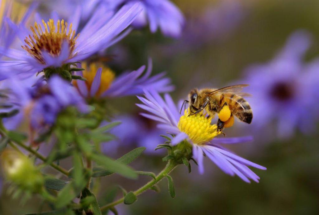 Las abejas pueden tener el secreto para los jóvenes de células madre