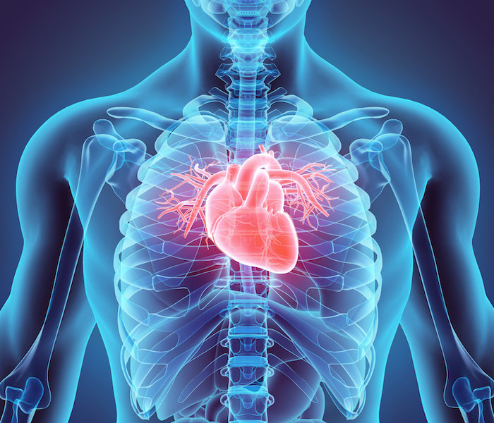 Ciertas células madre placentarias pueden regenerar el corazón después de un ataque cardíaco