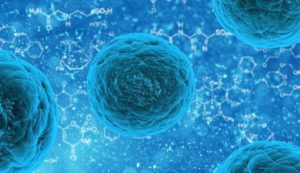 Las células madre tienen un mecanismo de defensa contra bacterias, revela estudio