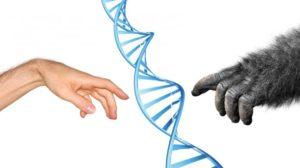 Los científicos cultivan el primer híbrido humano-mono en China