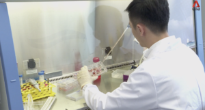 Investigadores liderados por NTU cultivan mini riñones utilizando células madre