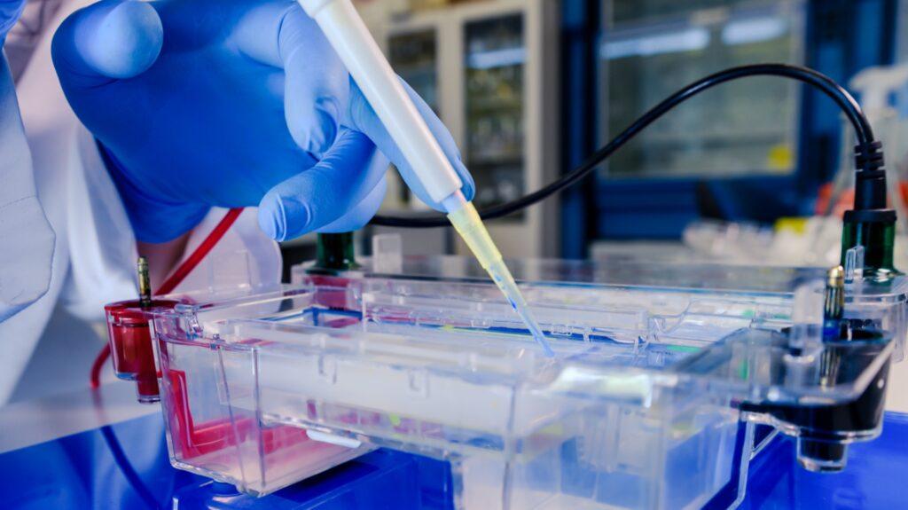 Las células madre probadas como terapia potencial para el coronavirus en un ensayo en la escuela de medicina de la Universidad de Maryland